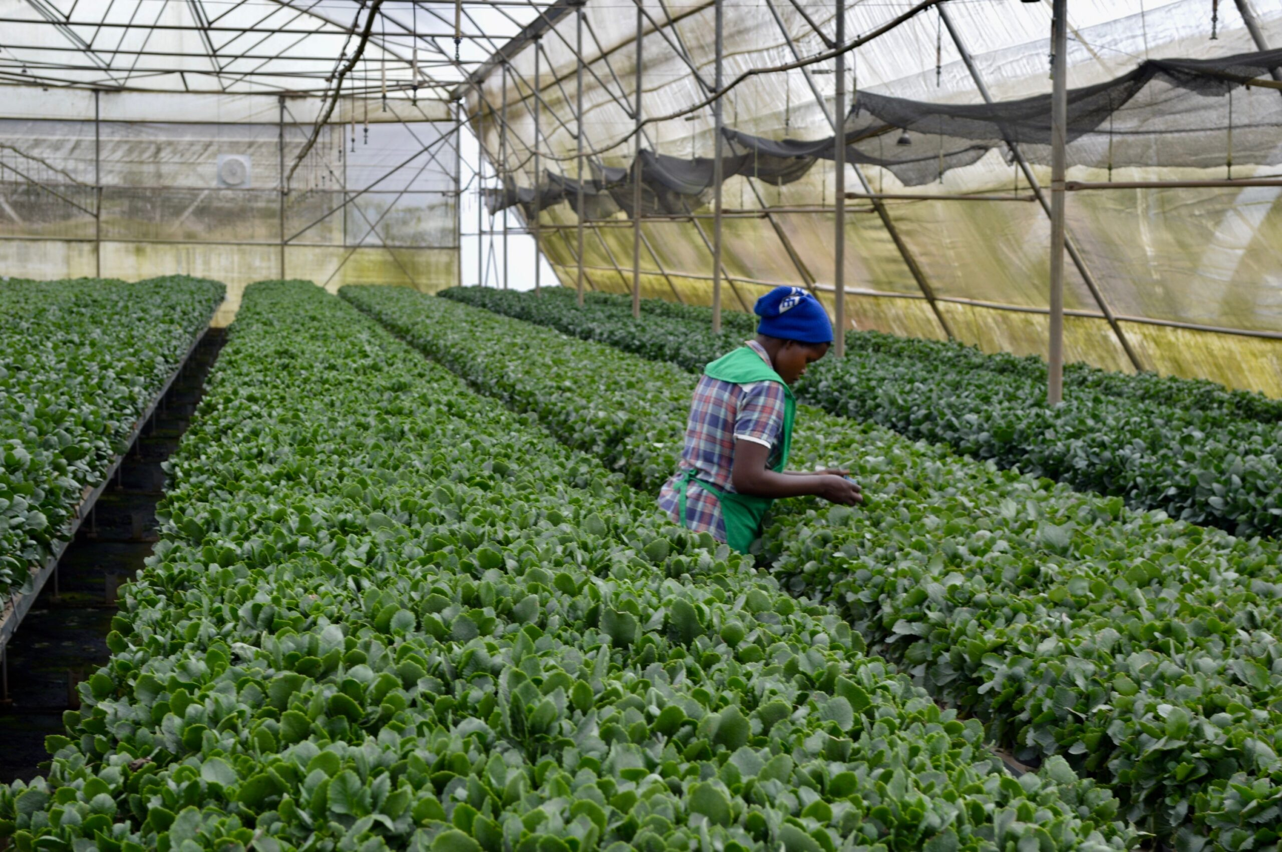 Senegal farm
