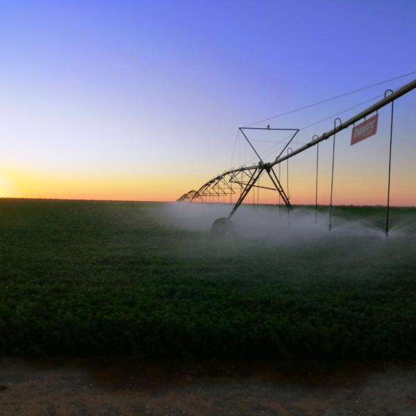Irrigating Sudan's alfalfa fields with solar power